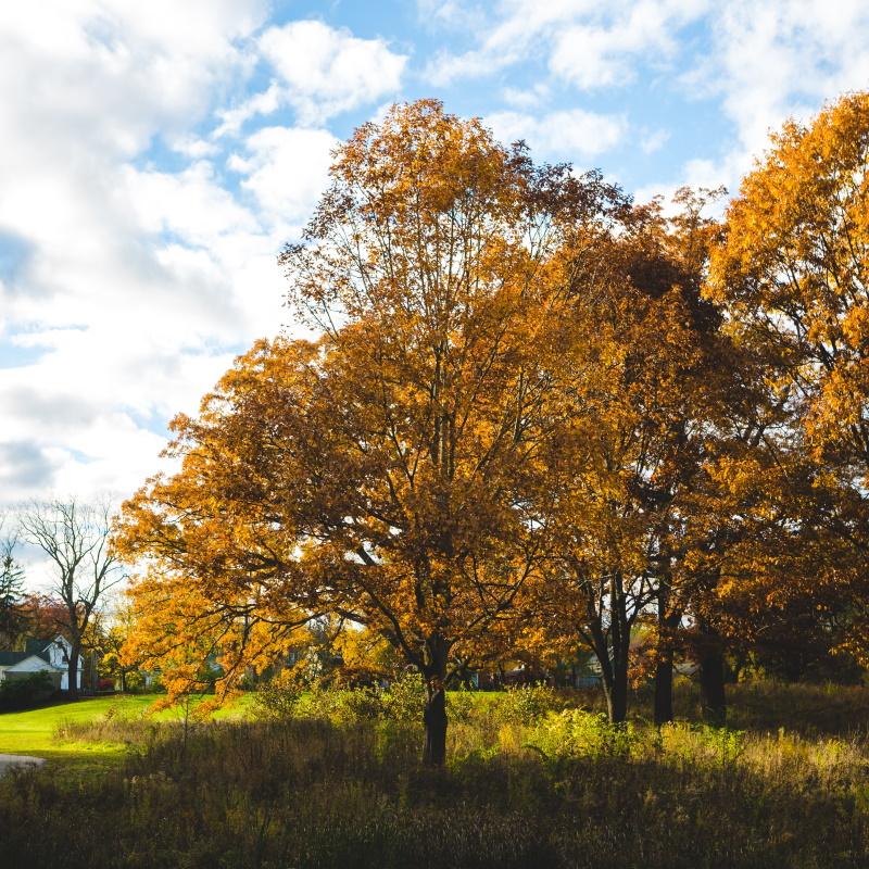 ann arbor autumn UWT7PC7