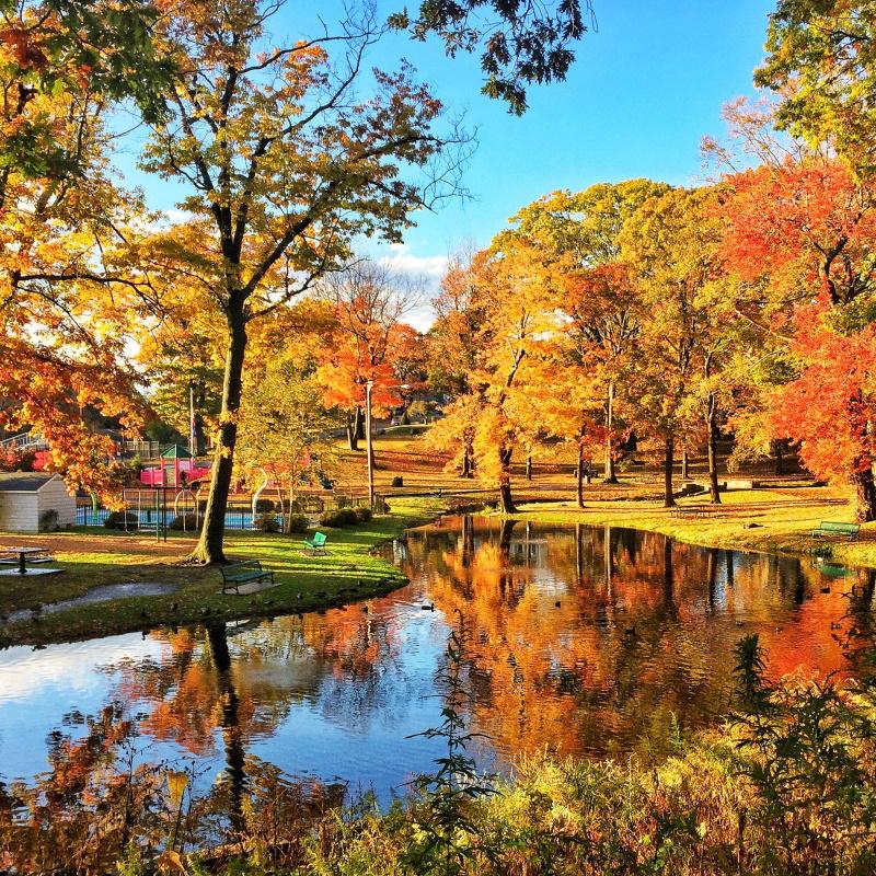 autumn nature in a connecticut park 39HF44R