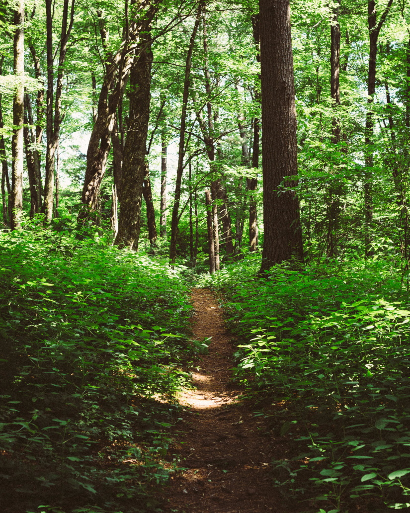 dirt trail in a tree filled forest in central wisc ZBZBRY8
